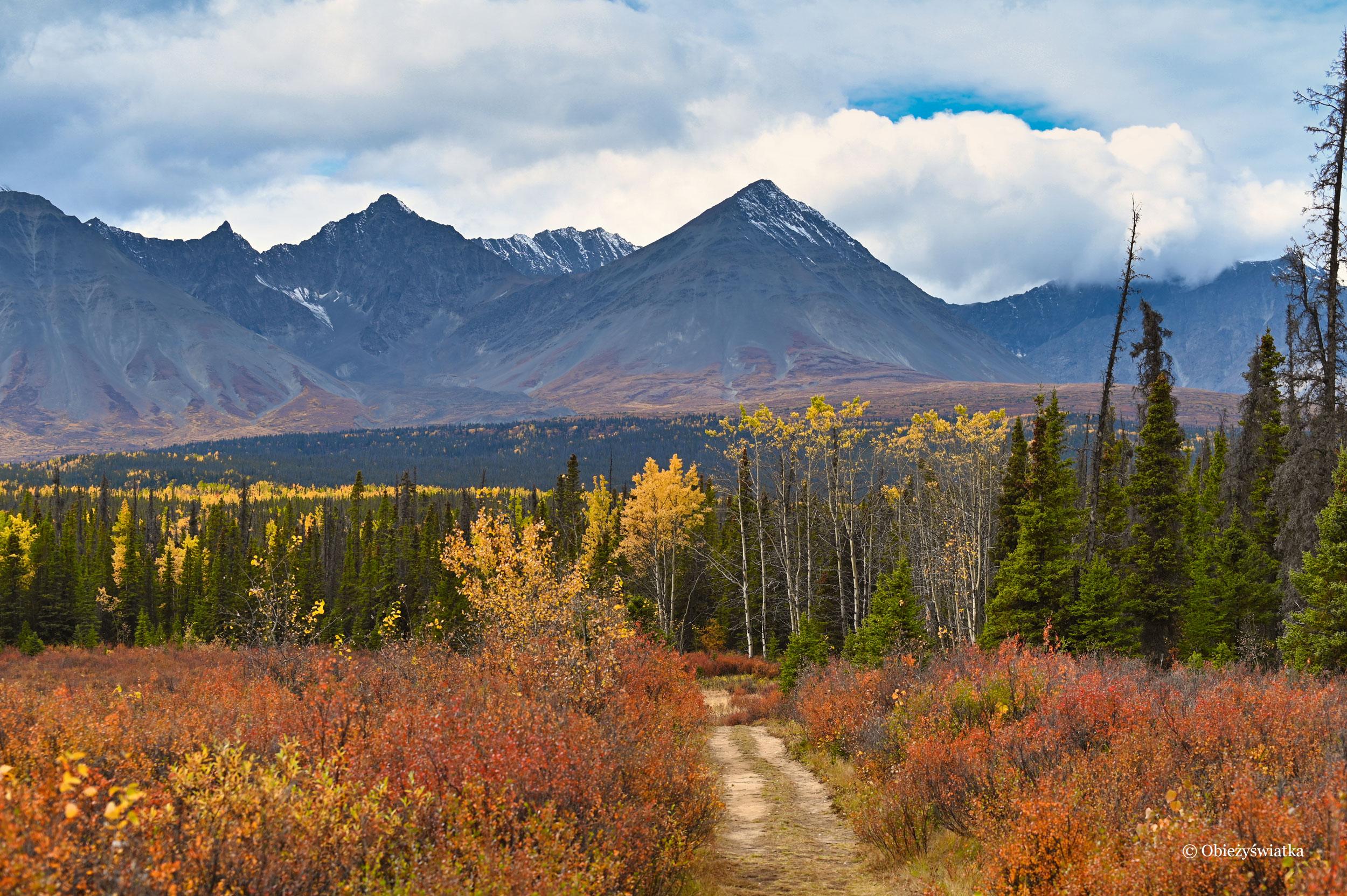 Jesienią w Parku Narodowym Kluane, Kanada