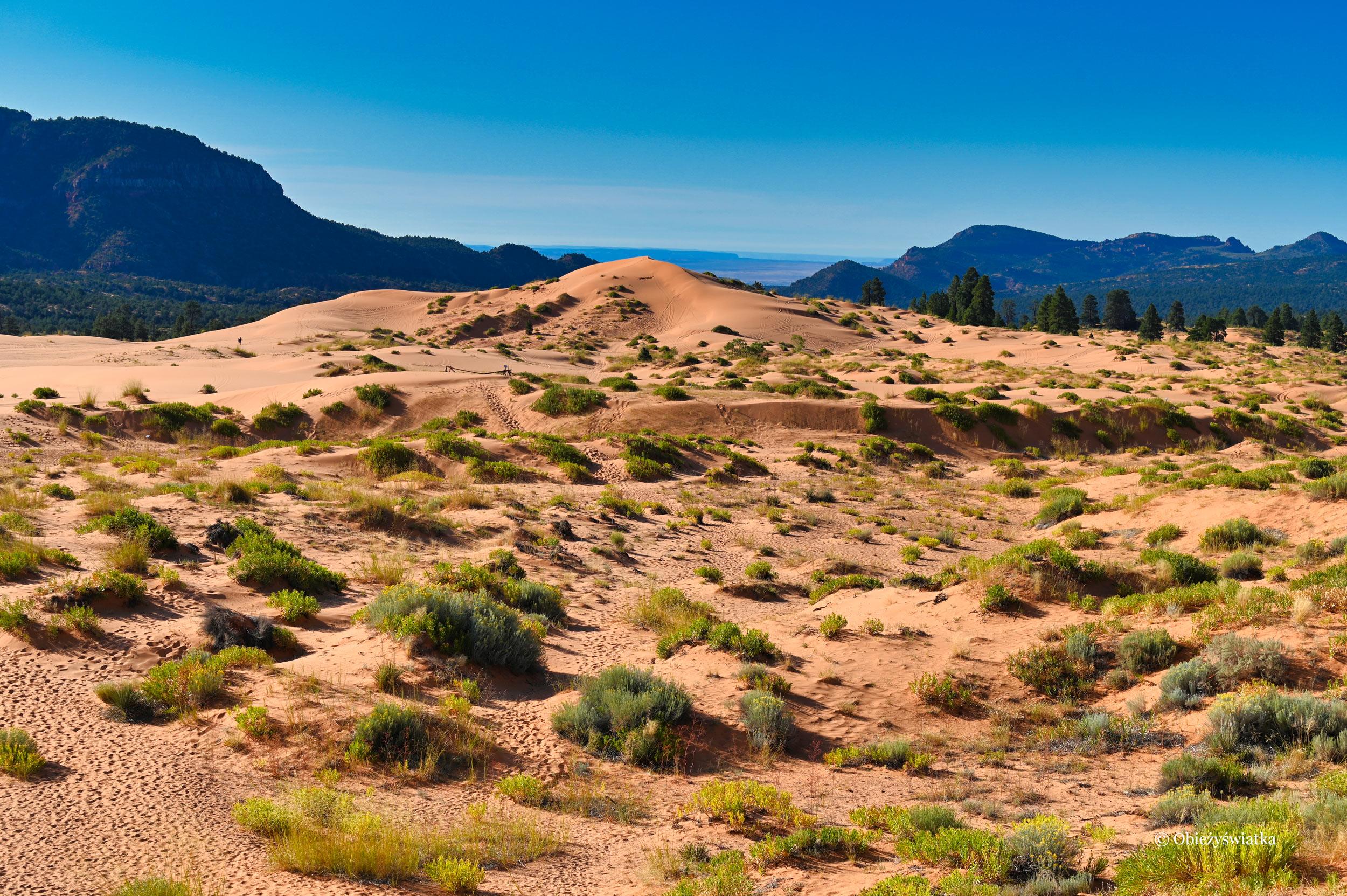 Wydmy i góry, Coral Pink Sand Dunes State Park, Utah