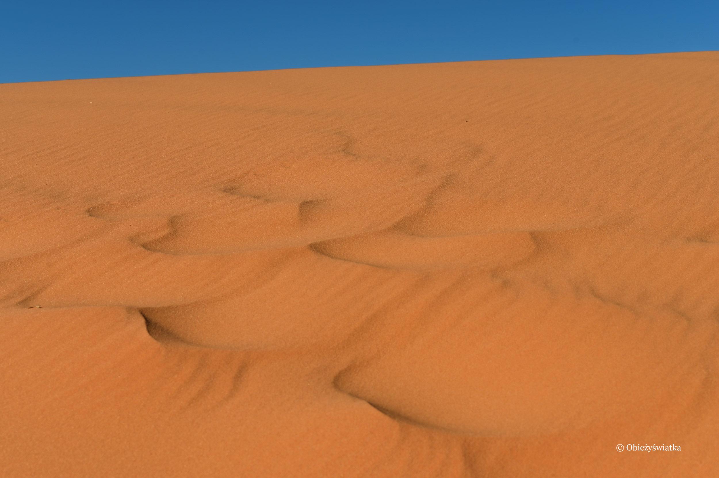 Mocno niebieskie niebo i pomarańczowy piasek wydm, Coral Pink Sand Dunes State Park, Utah