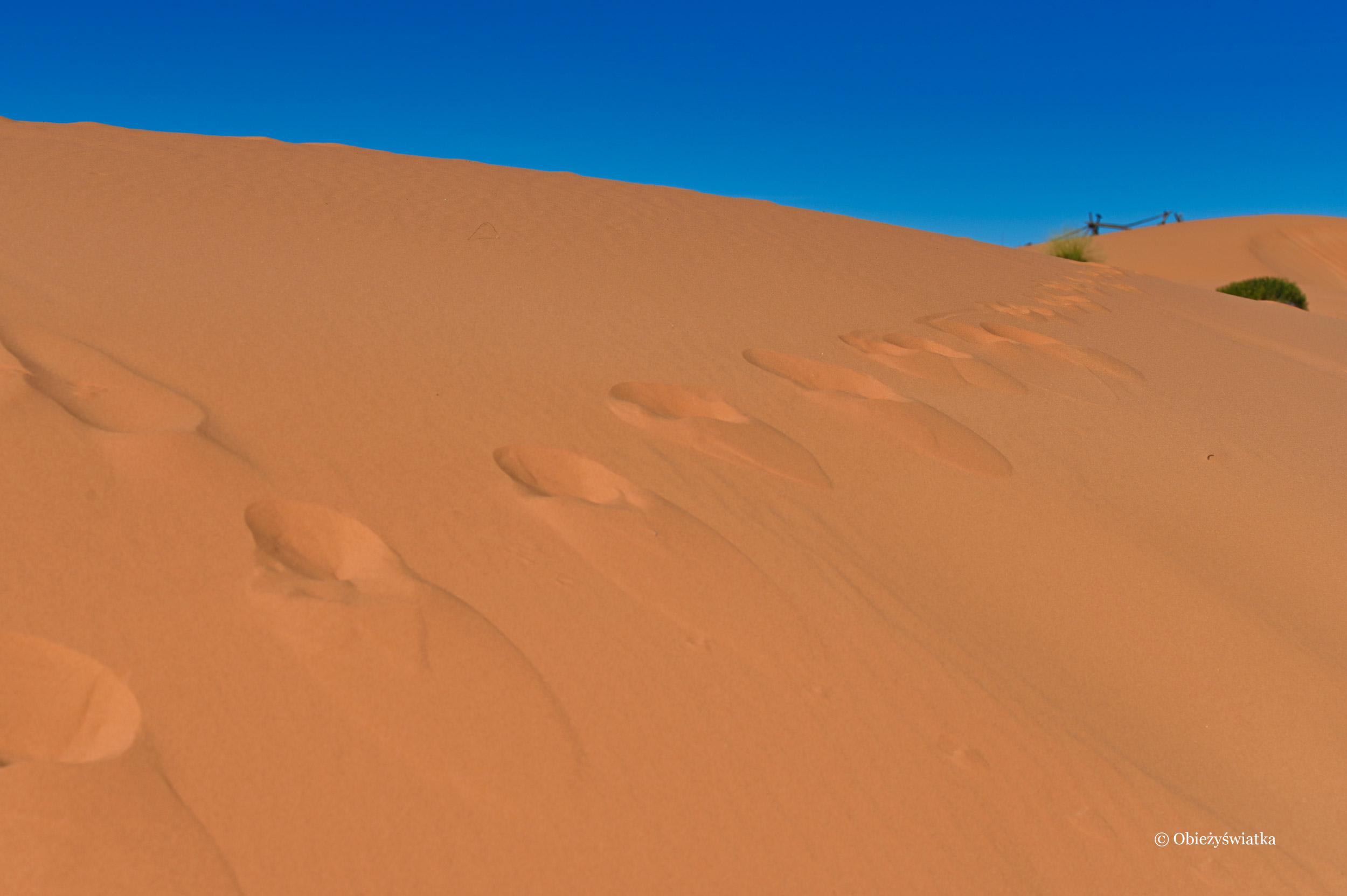 Na tropie..., Coral Pink Sand Dunes State Park, Utah