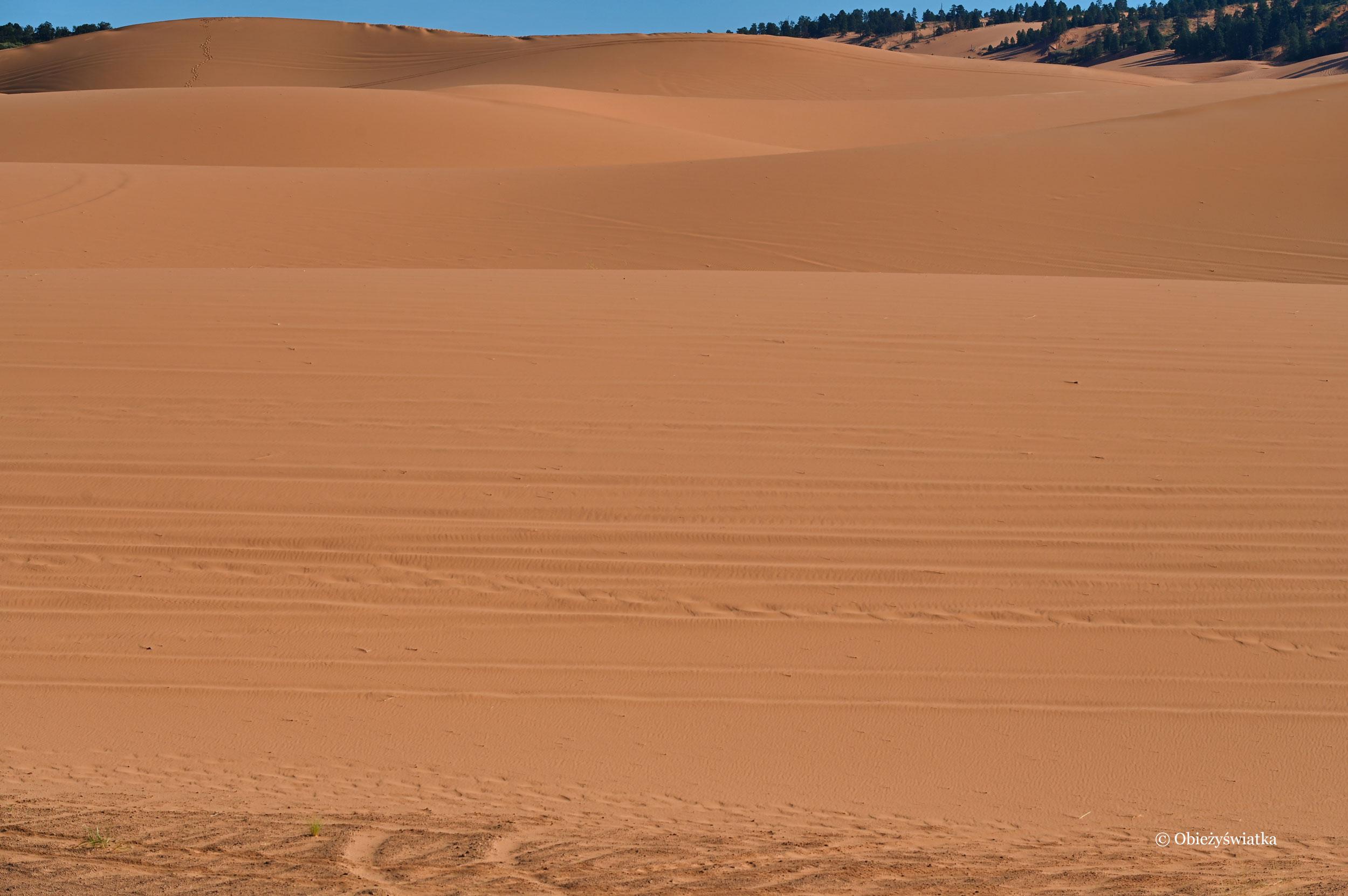 Pomarańczowa pustynia, Coral Pink Sand Dunes State Park, Utah