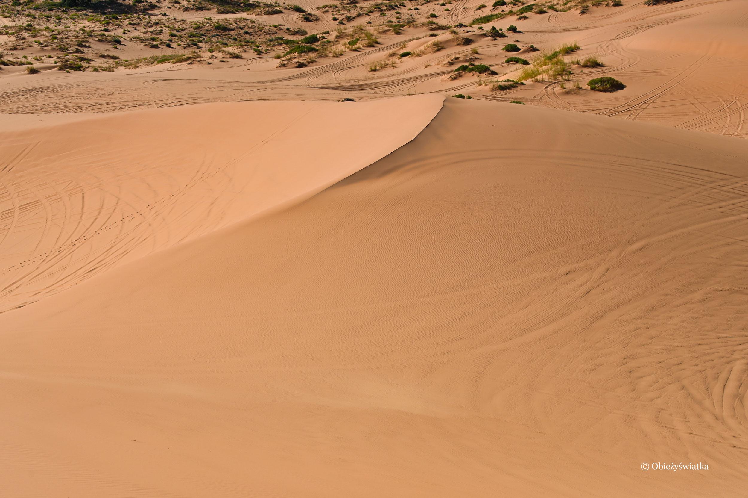 Uczesane wiatrem...., Color Pink Sand Dunes State Park, Utah