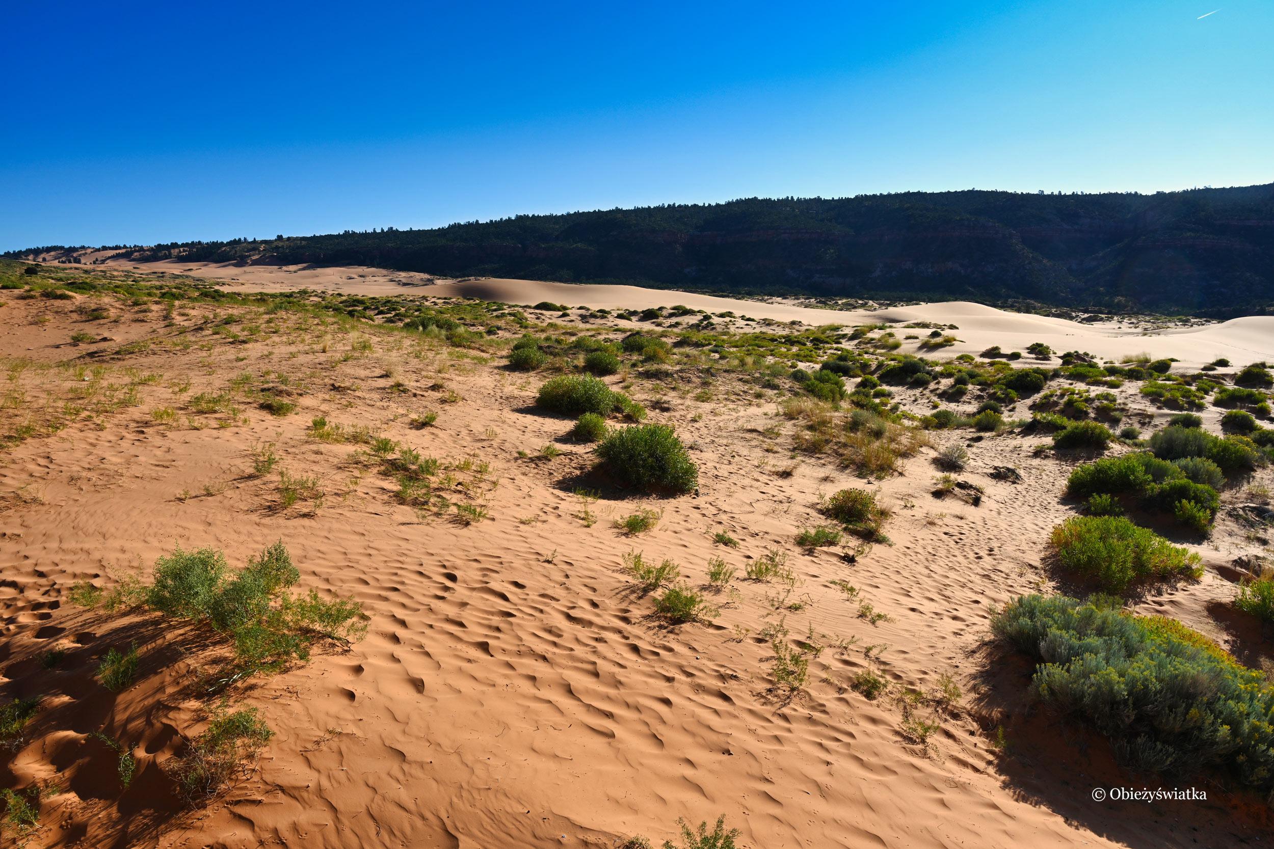 W Parku Stanowym Koralowych Wydm, Coral Pink Sand Dunes State Park, Utah
