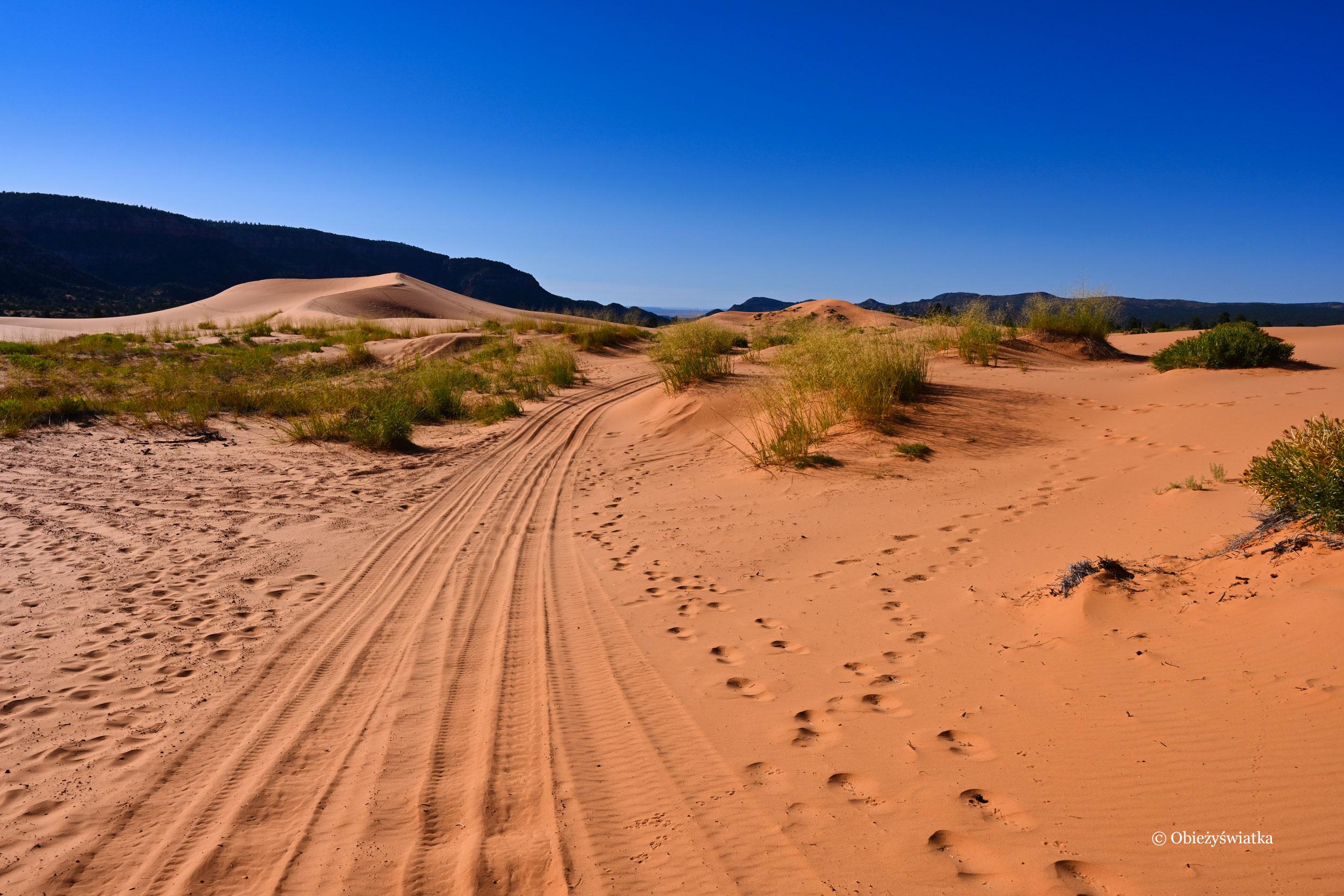Przed siebie..., Coral Pink Sand Dunes State Park, Utah