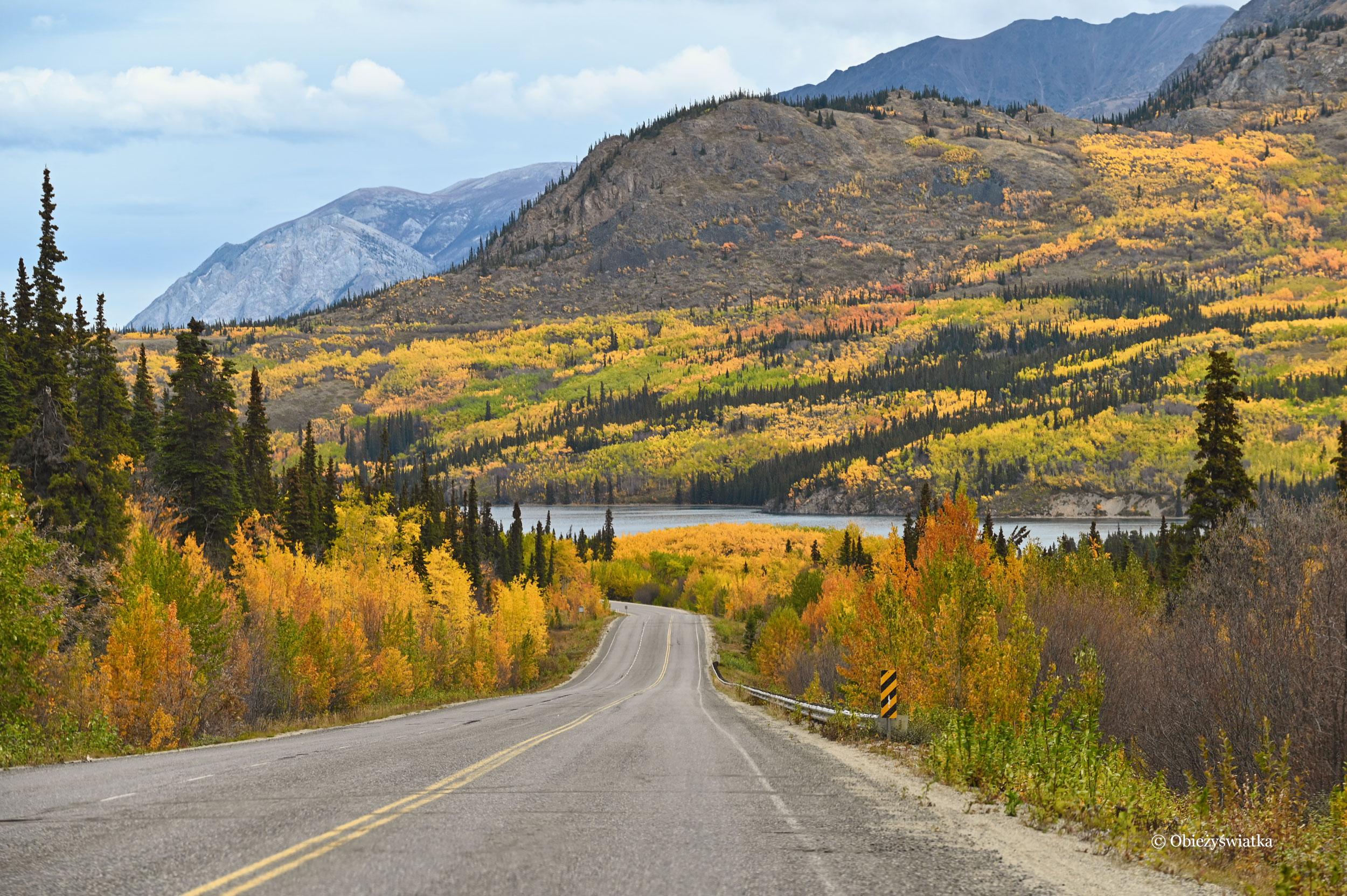Góry, lasy w jesiennej szacie - Yukon, Klondike Highway, Kanada