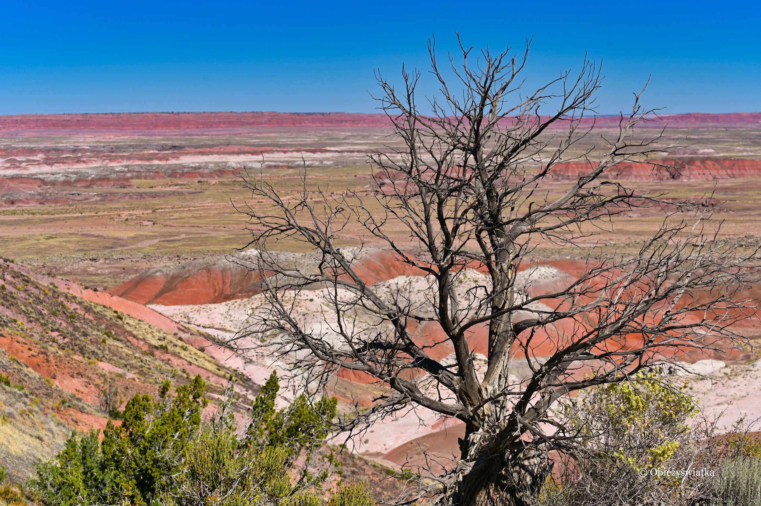Pustynia - Painted Desert, Arizona