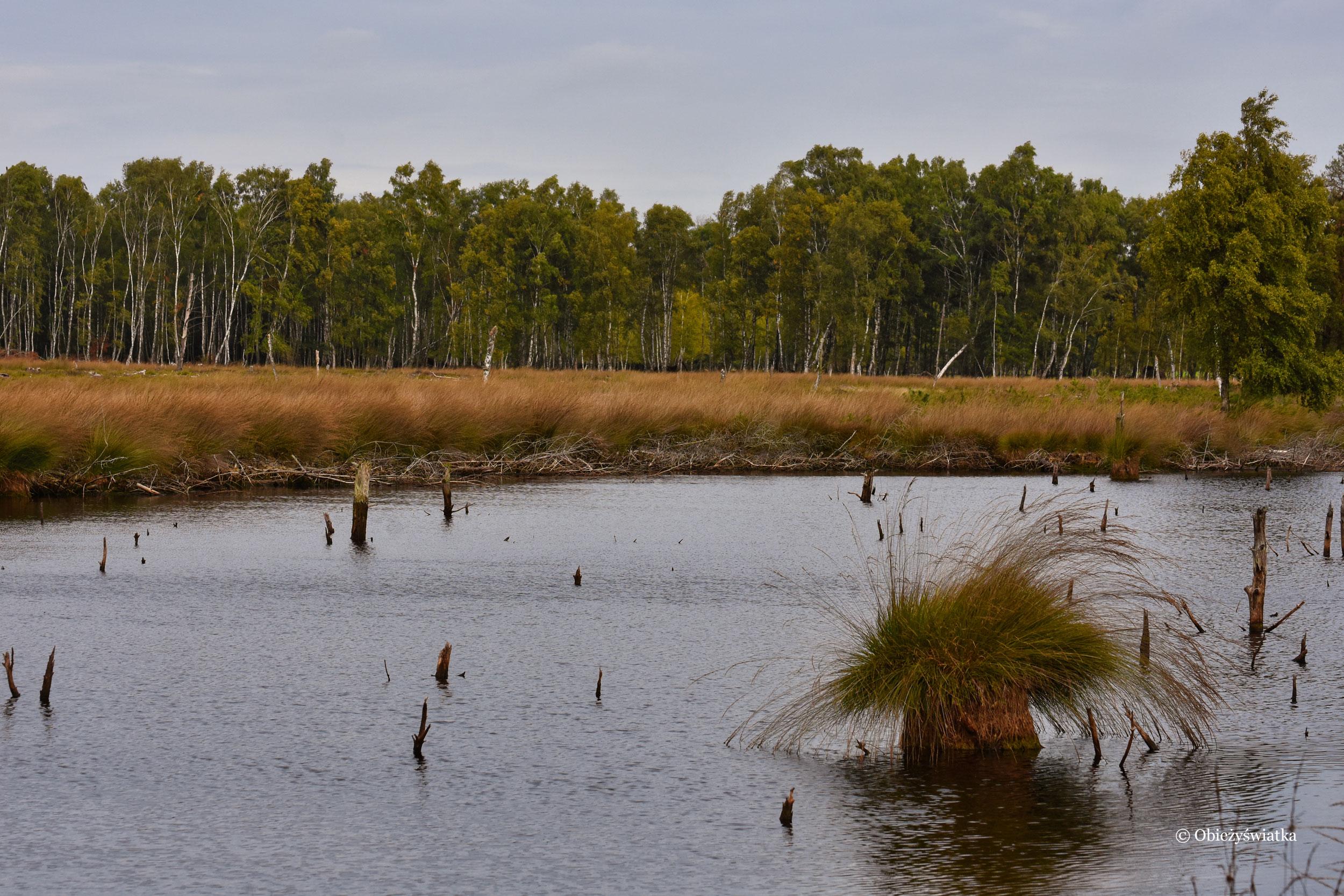 Mokradła i wrzosowiska, Lüneburger Heide, Niemcy