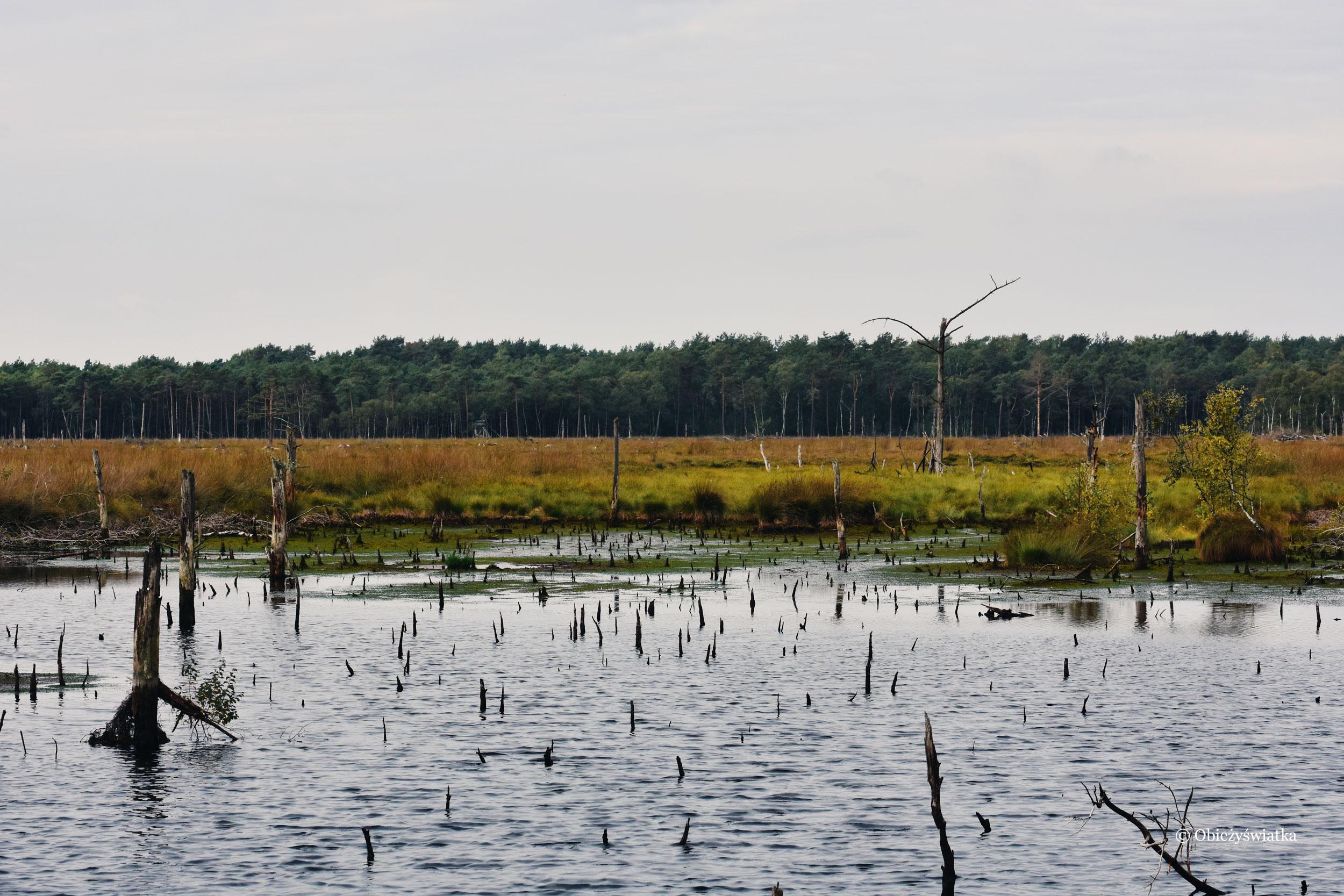 Jesienne mokradła, Lüneburger Heide, Niemcy