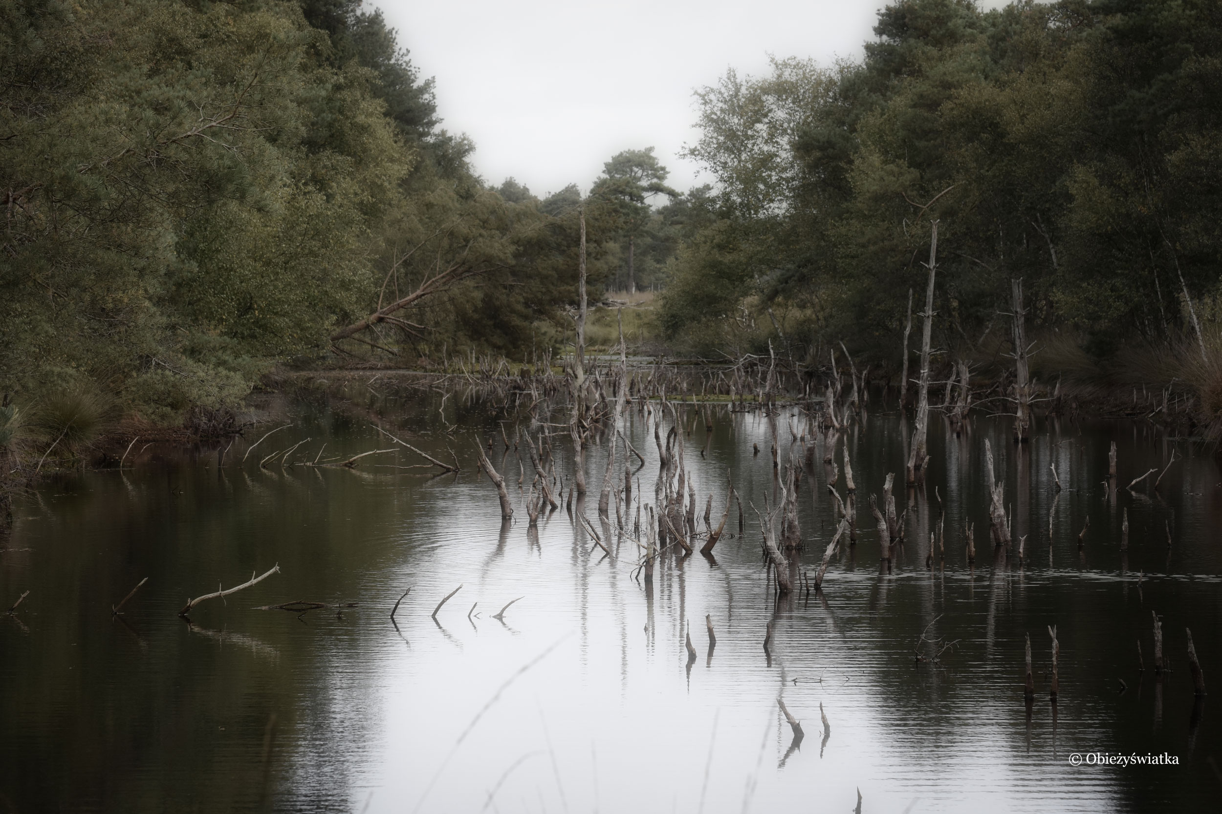 Osobliwości, Mokradła - Lüneburger Heide, Niemcy