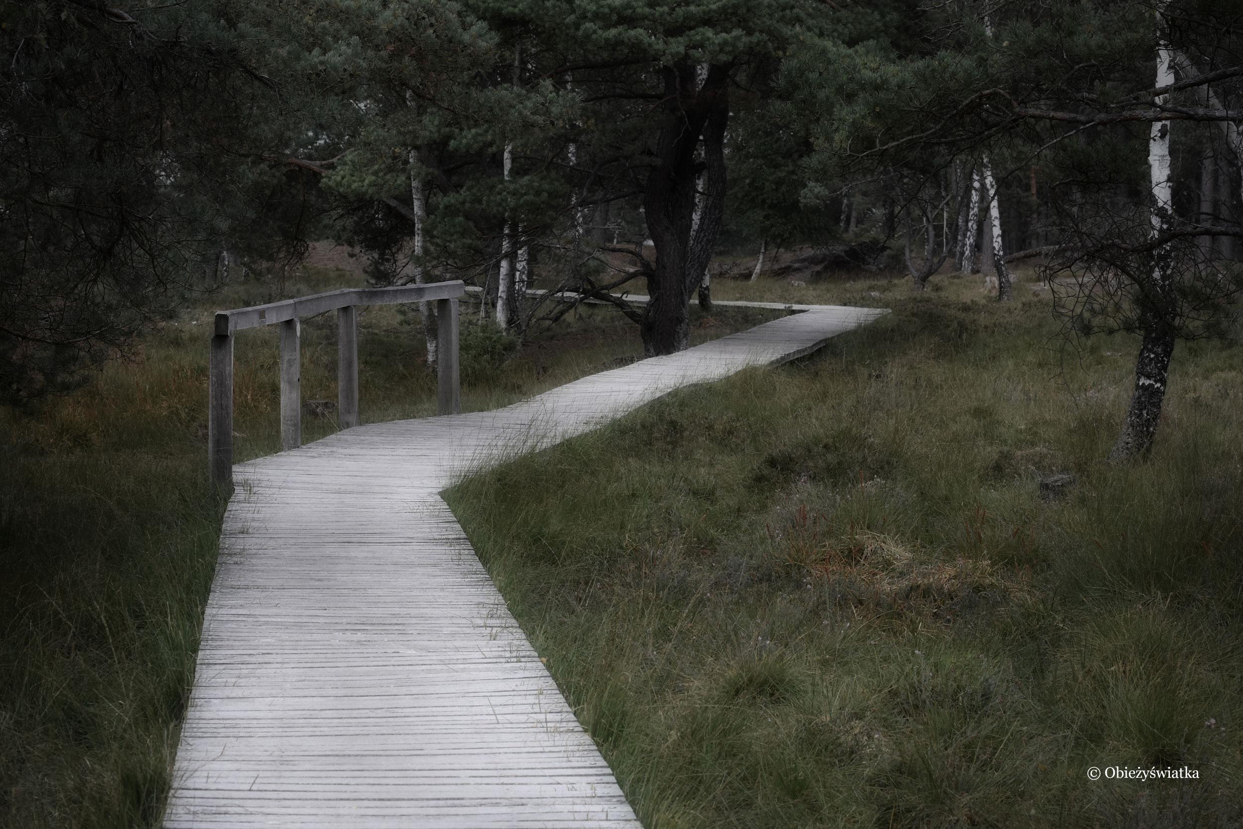Dróżki przez wrzosowiska, Lüneburger Heide, Niemcy
