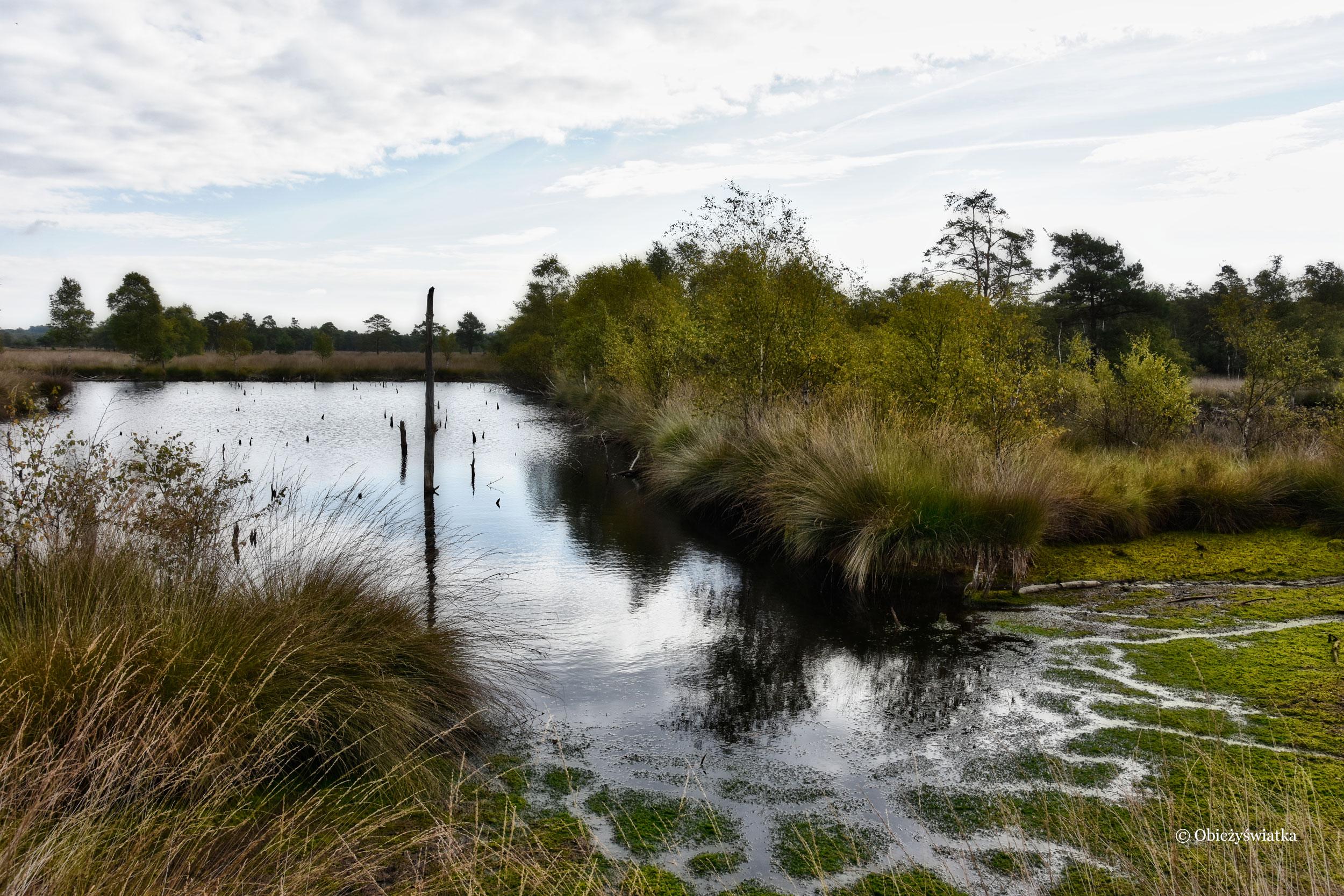 Mokradła - Lüneburger Heide, Niemcy