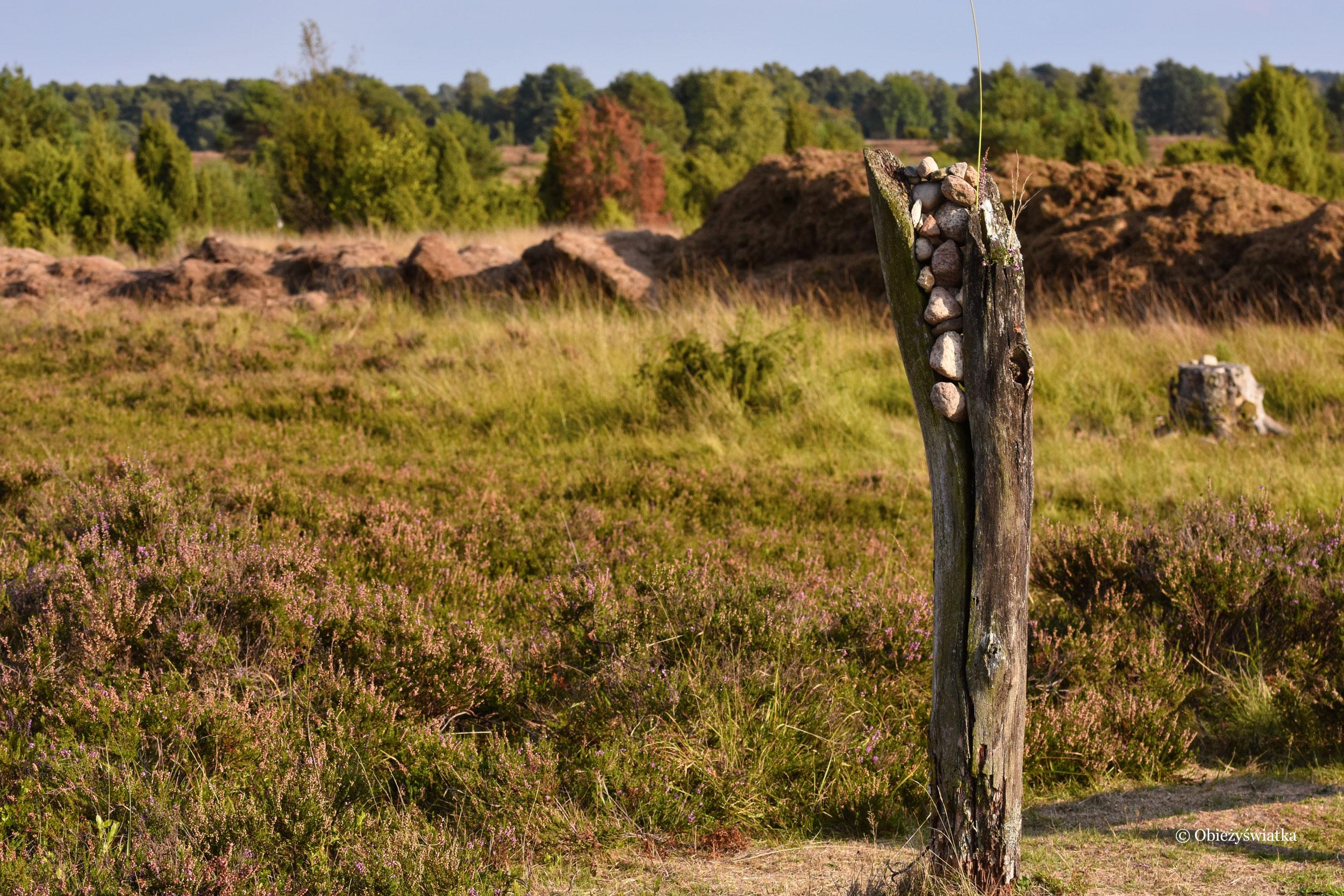 Pustać Lüneburska - Lüneburger Heide, Dolna Saksonia