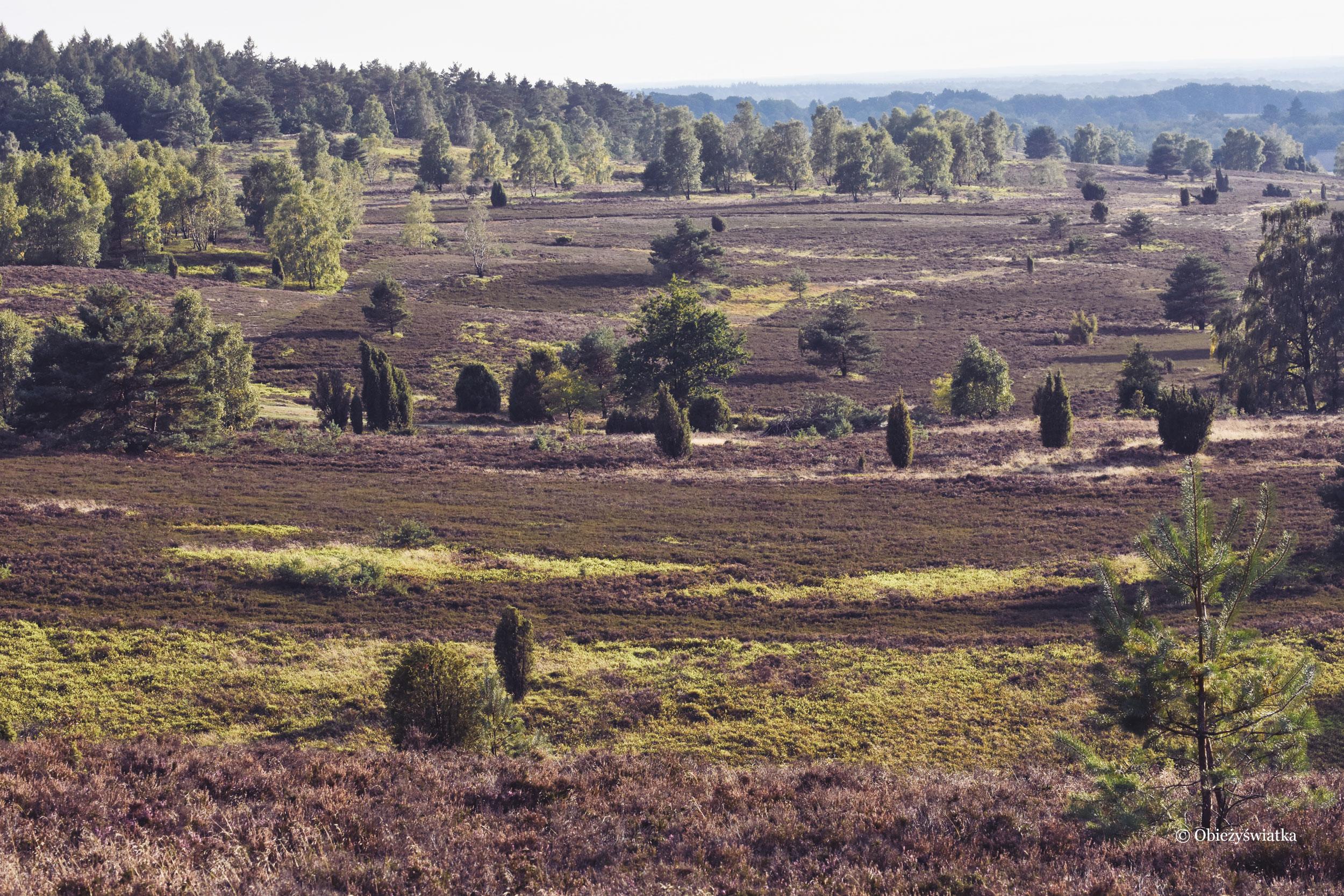 Jesienne wrzosowiska, Lüneburger Heide, Niemcy