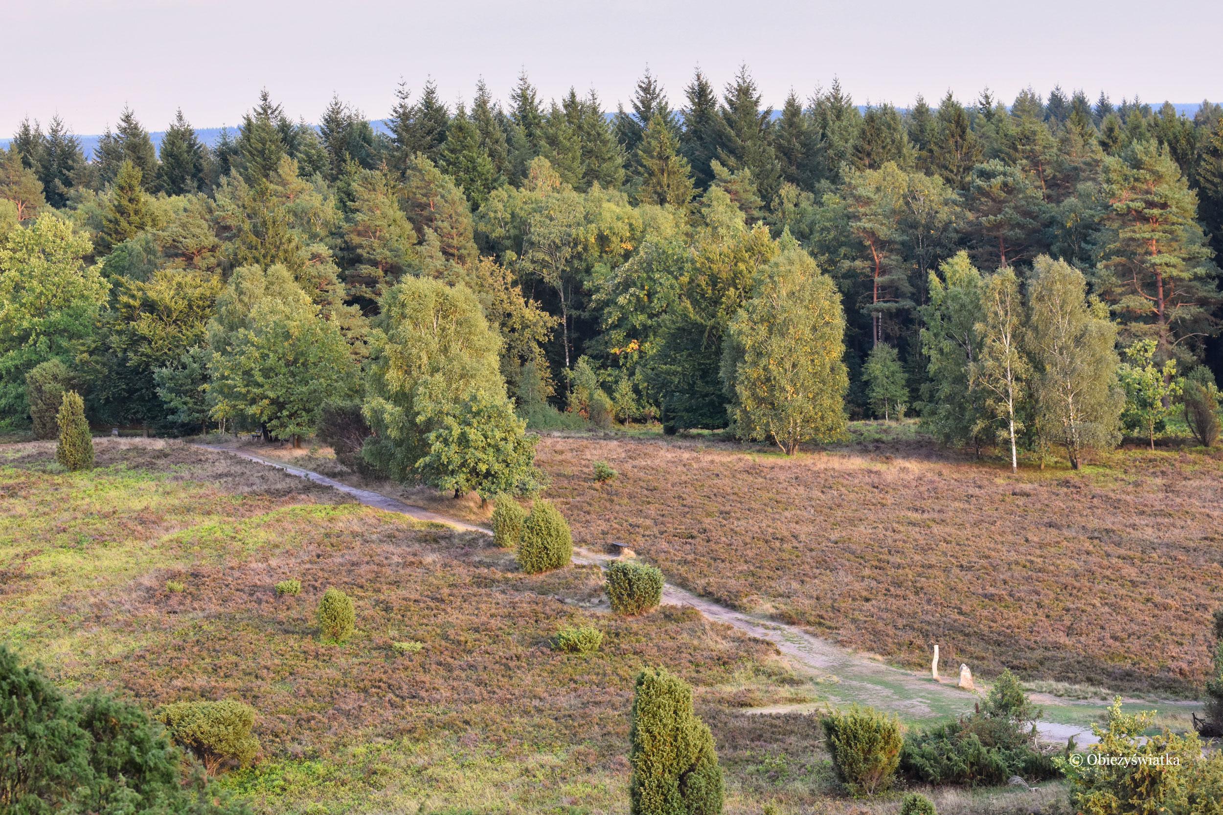Toter Grund, Lüneburger Heide, Dolna Saksonia