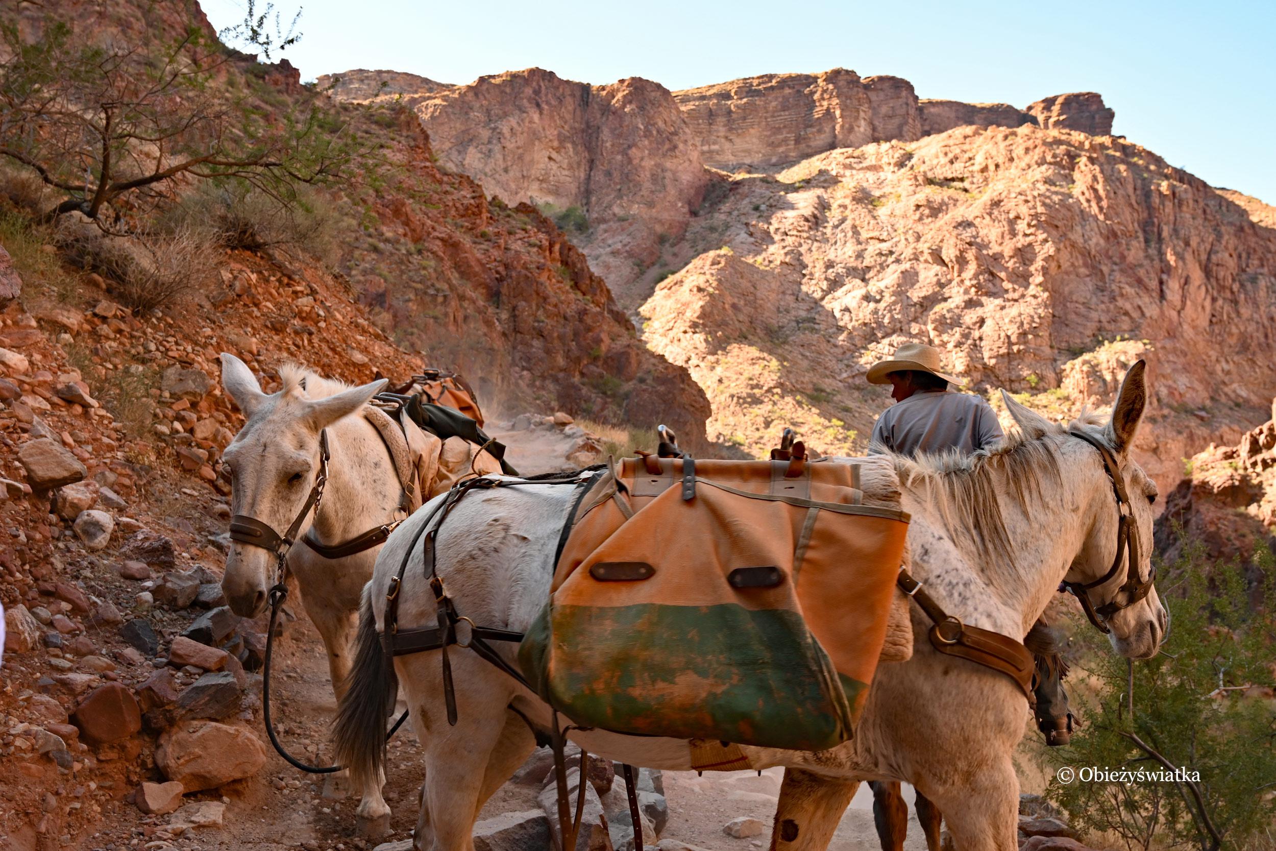 Zwierzęta na szlaku Bright Angel Trail, Grand Canyon
