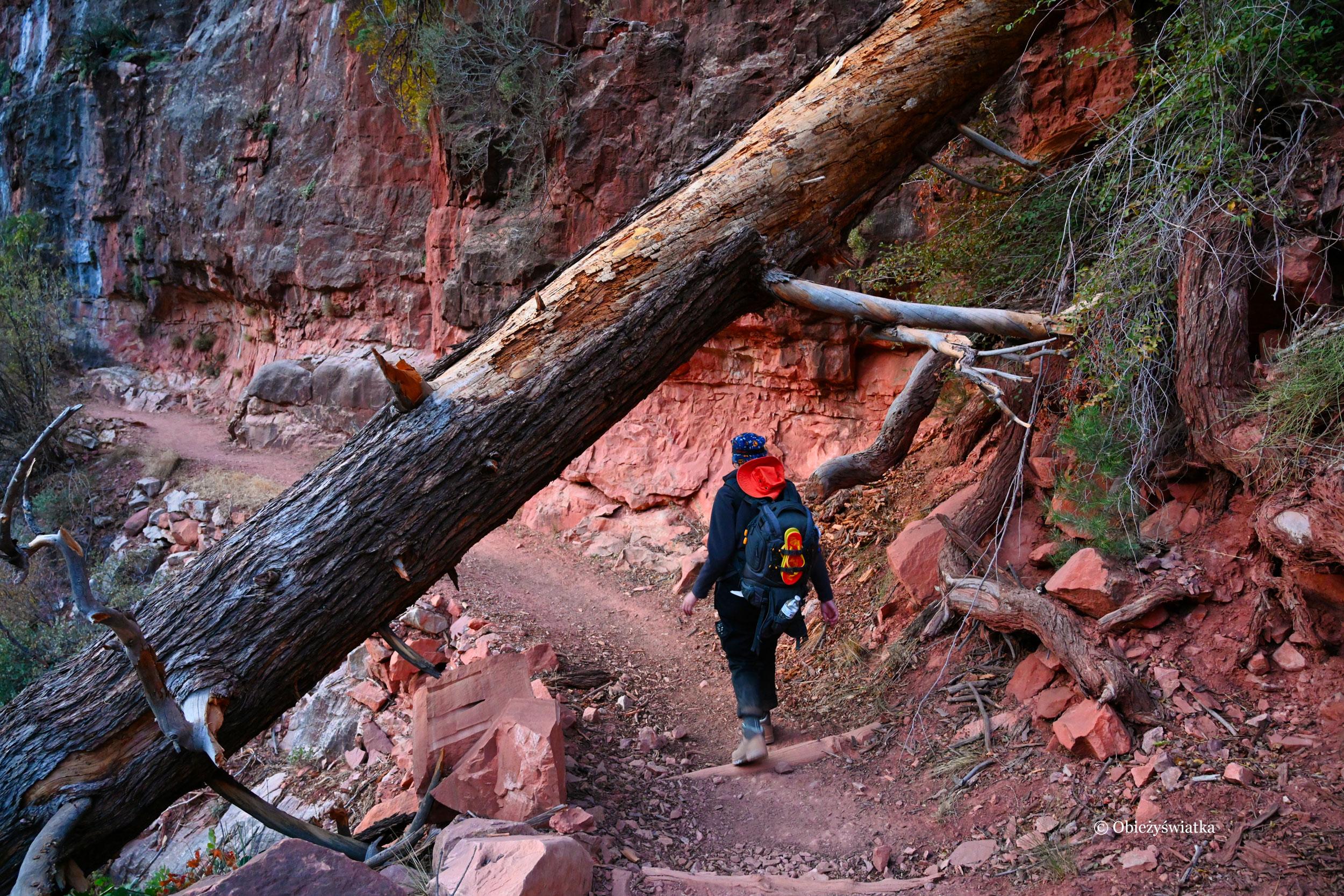 Po wschodzie słońca na szlaku North Kaibab Trail, Grand Canyon, Arizona