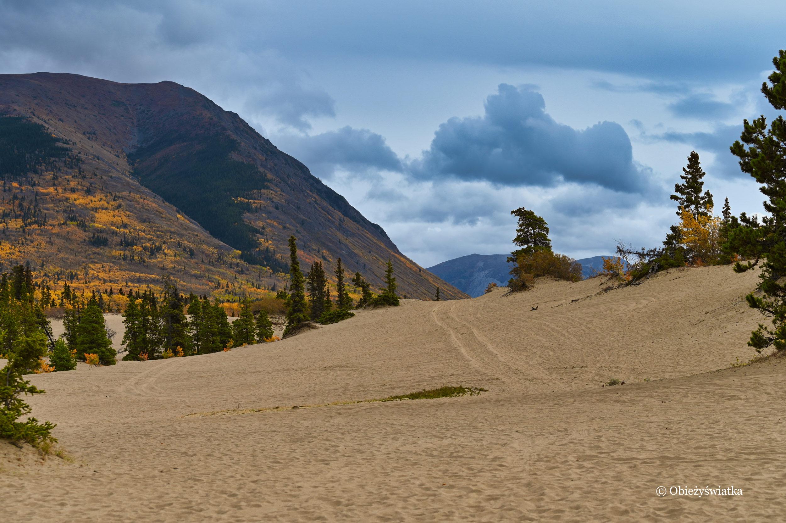 Przez Pustynię Carcross, Yukon, Kanada