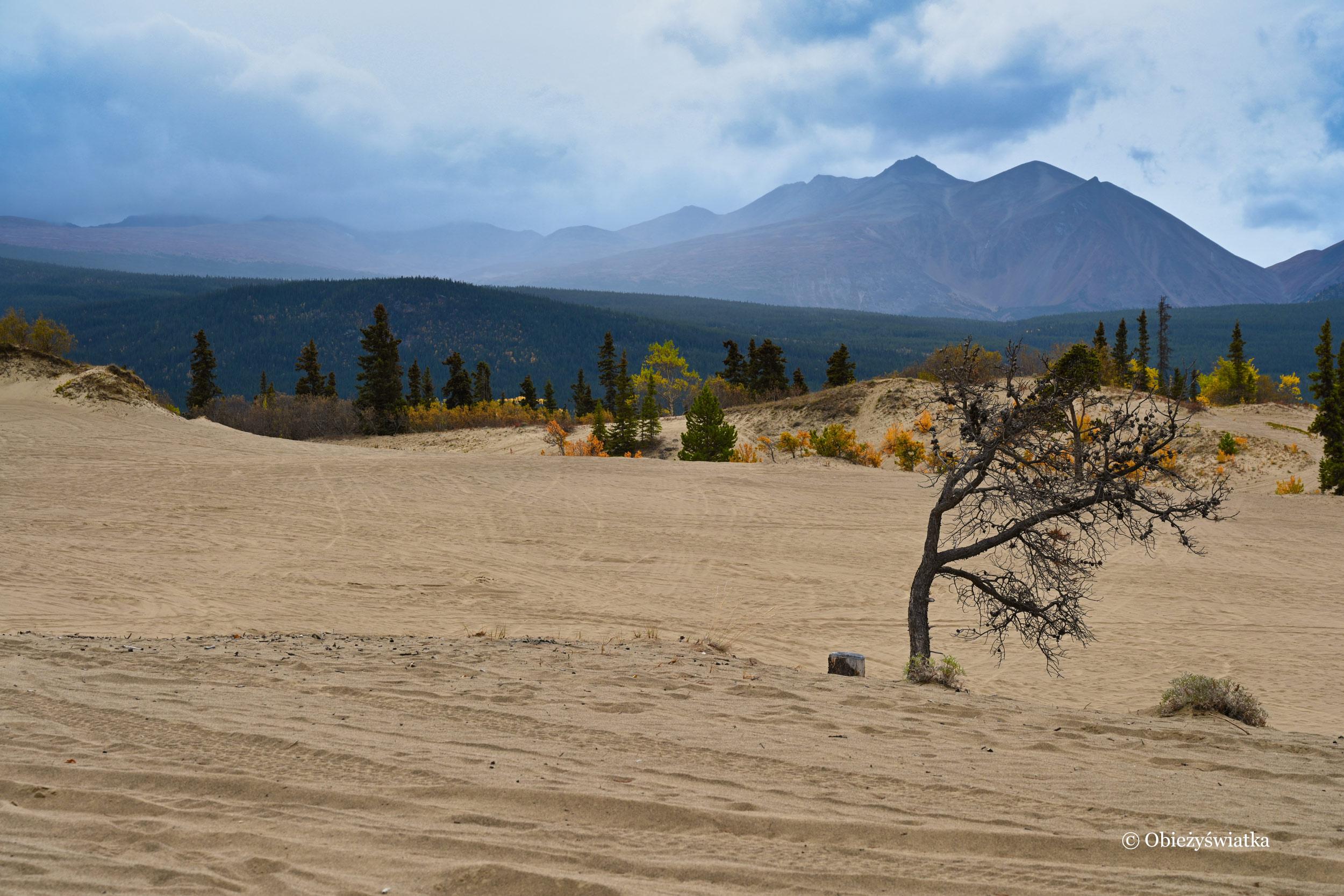Pustynia Carcross w jesiennej szacie, Yukon, Kanada