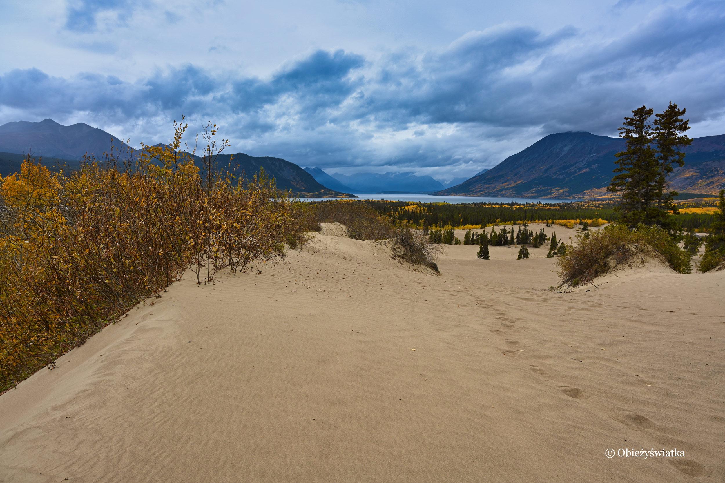 Na pustyni Carcross, Yukon, Kanada
