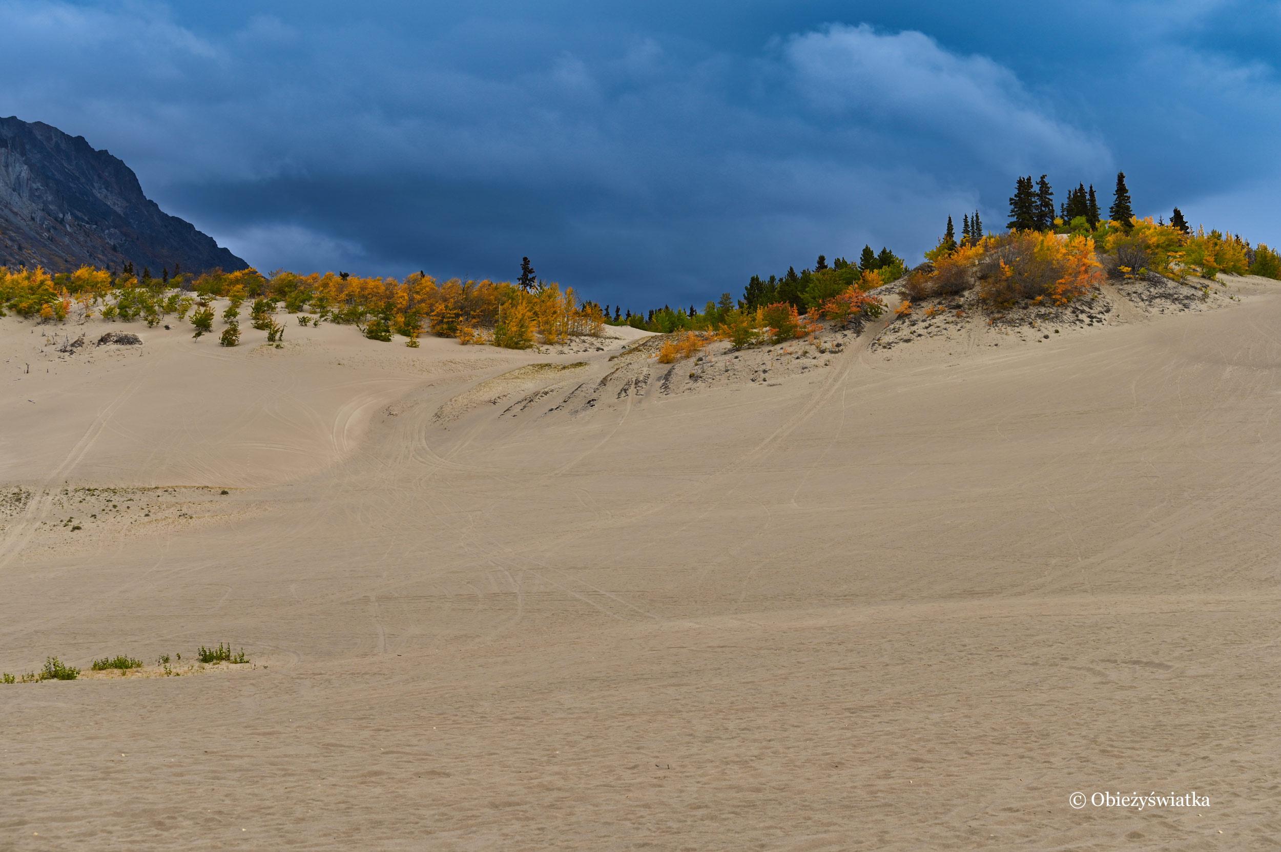 Wydmowe wzgórza - Carcross Desert, Yukon, Kanada