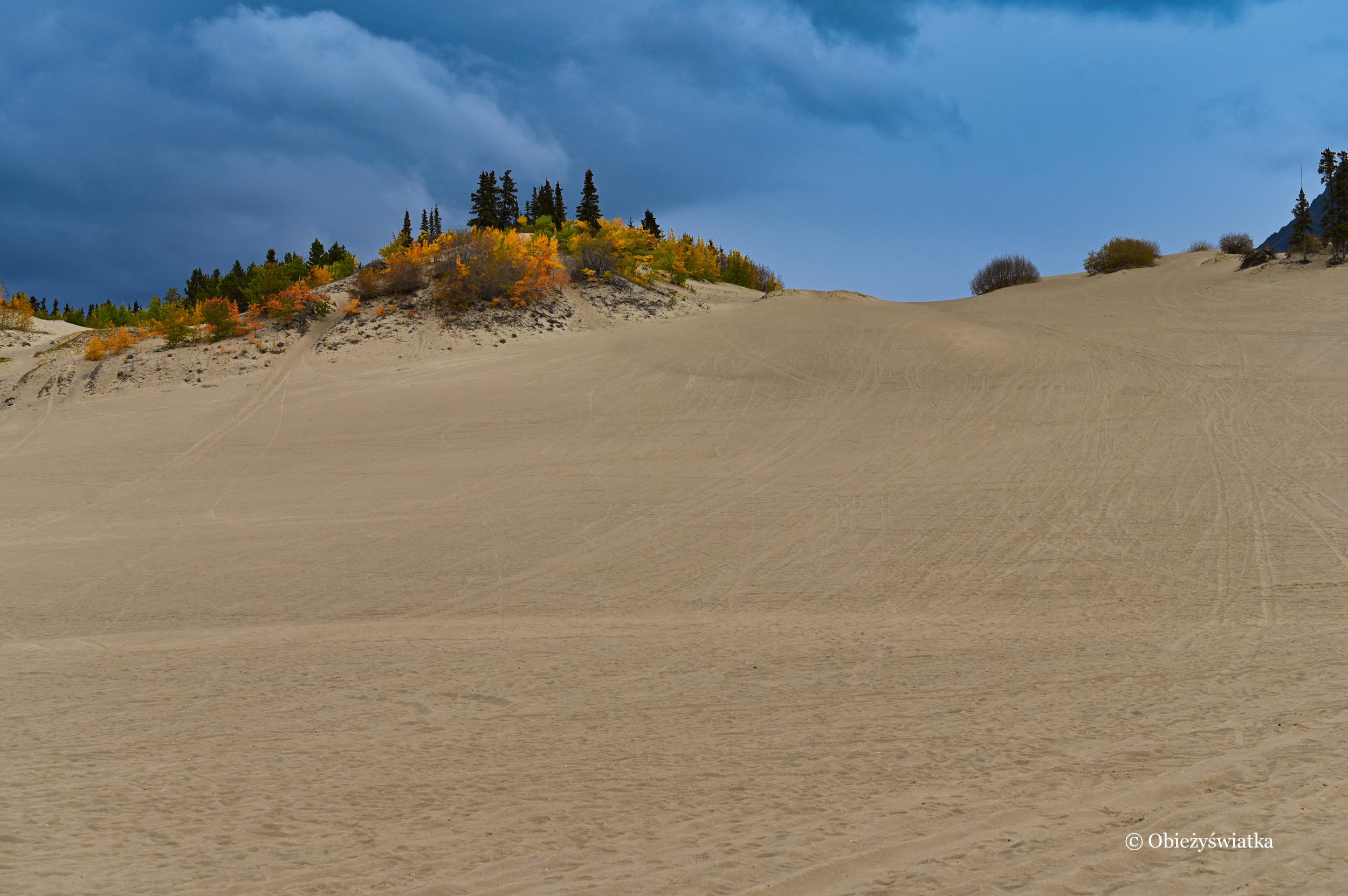 Pustynia Carcross, Yukon, Kanada