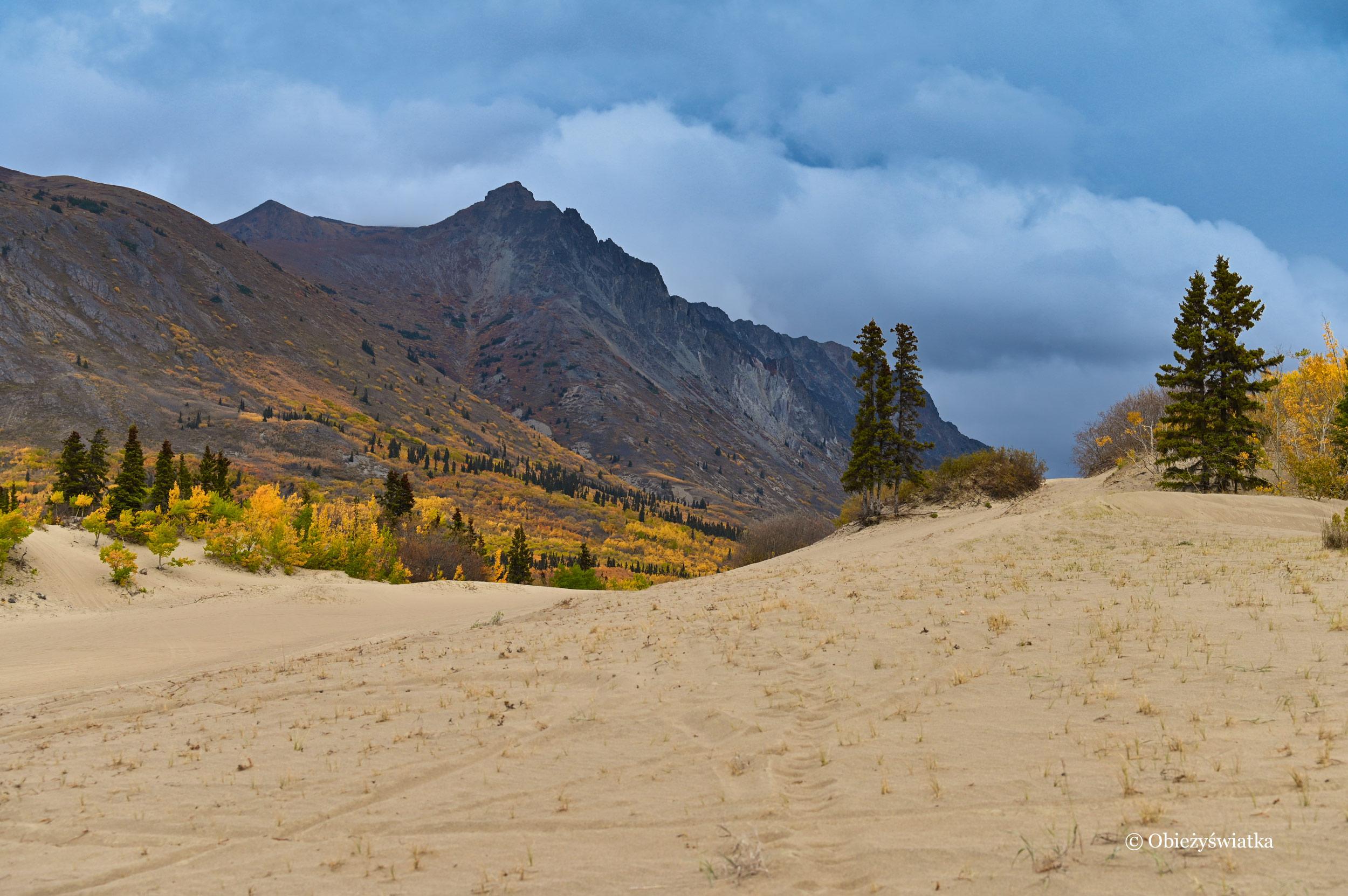 Natura ... - Carcross Desert, Yukon, Kanada