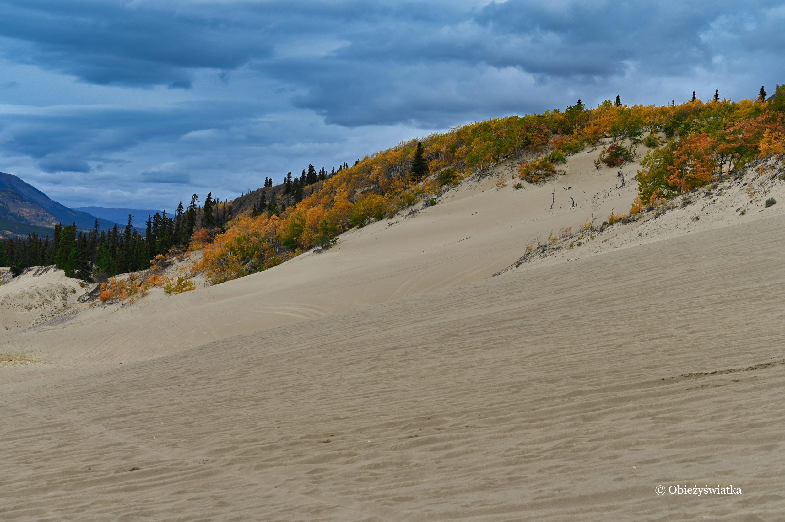 Jesień na Pustyni Carcross, Yukon, Kanada